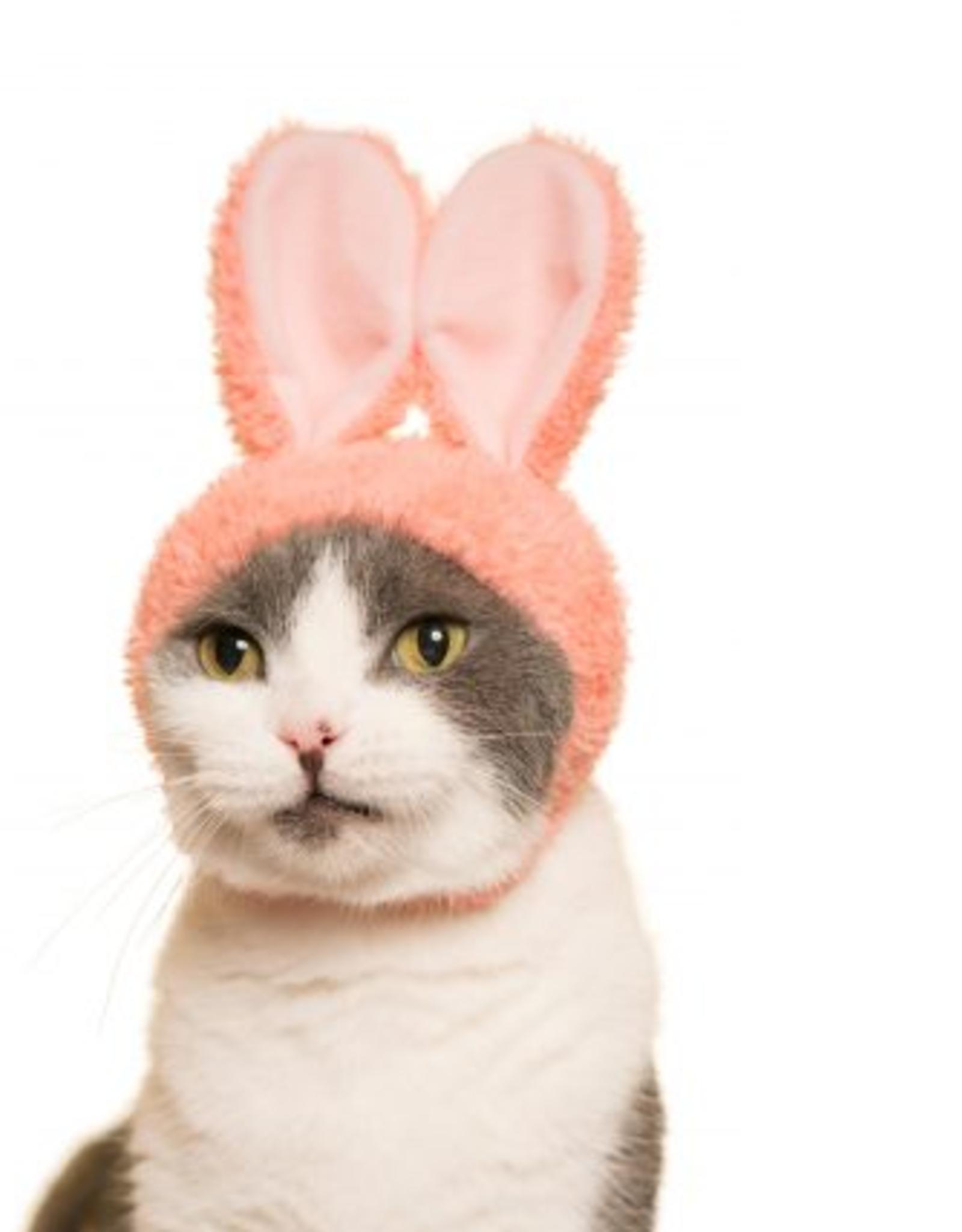 Clever Idiots Cat Hat