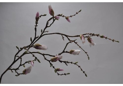 Fine Asianliving Magnolia tak roze 125 cm