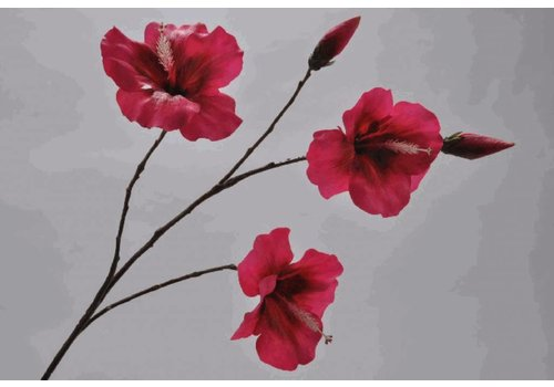 Fine Asianliving Hibiscus Tak Beauty 90 cm