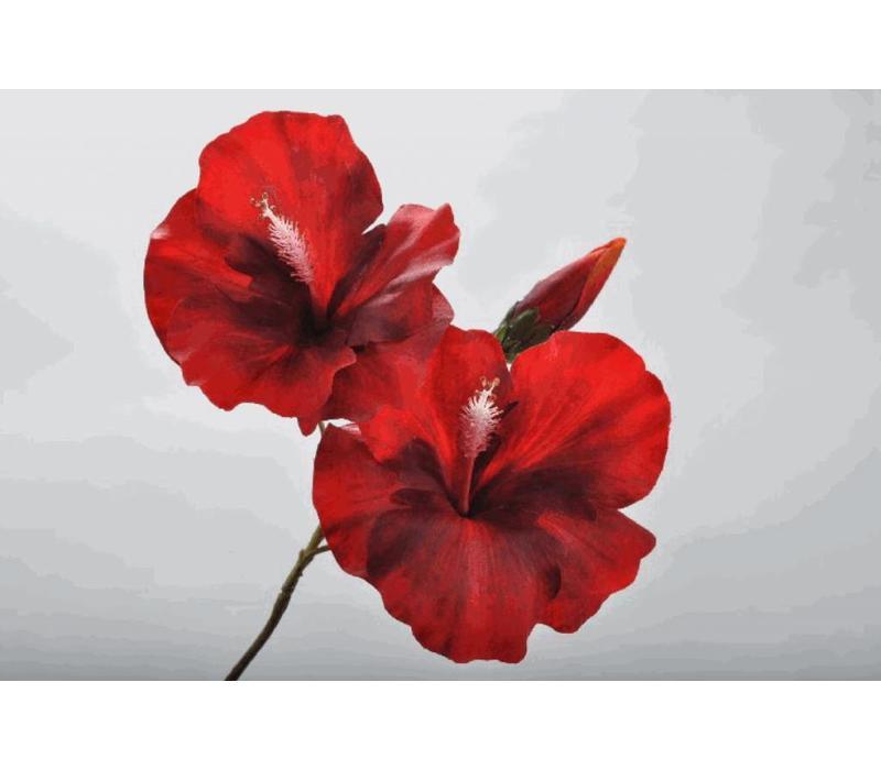 Hibiscus Steker Rood 42 cm