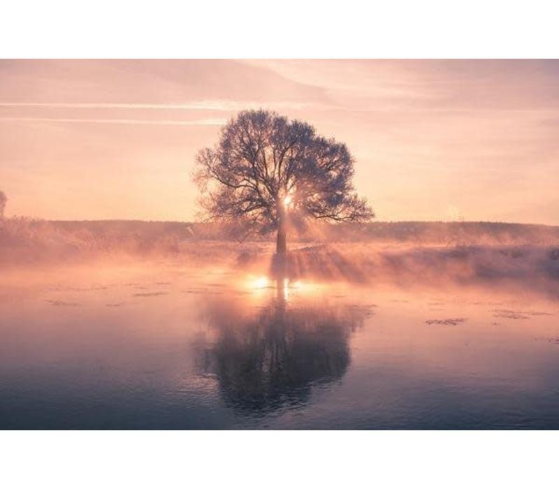 Sunset Tree with Reflection Digitalprint W120xH80cm Acrylic Glass