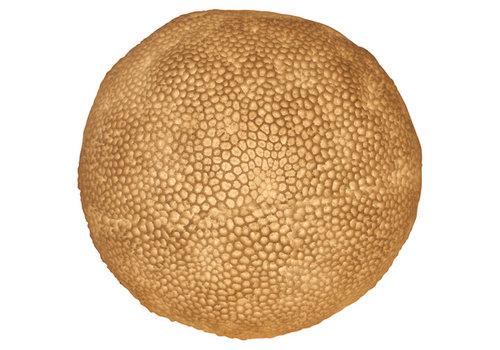 Fine Asianliving Lámpara de Mesa de Piedra Arenisca la Bola de Coral 31.5 x28.5 cm