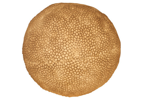 Fine Asianliving Sandstone Table Lamp Coral Ball 31.5x28.5cm