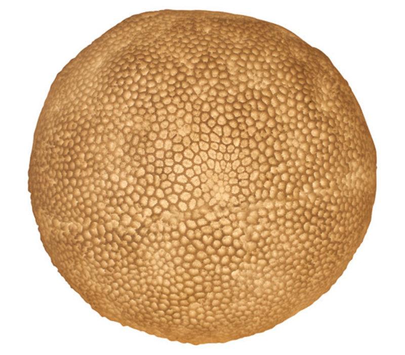 Lampe à Poser en Grès Boule de Corail 31.5x28.5cm