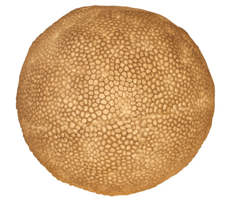 Sandstone Table Lamp Coral Ball 31.5x28.5cm