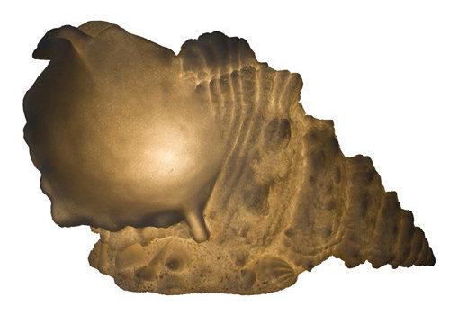 Fine Asianliving Lámpara de Mesa de Piedra Arenisca Concha 39.5 x21.5 x23.8 cm