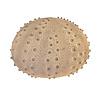 Fine Asianliving Fine Asianliving Sfeerlamp Nachtlamp Sea Urchin Lamp Handgemaakt Sandstone 40.5x26.8cm