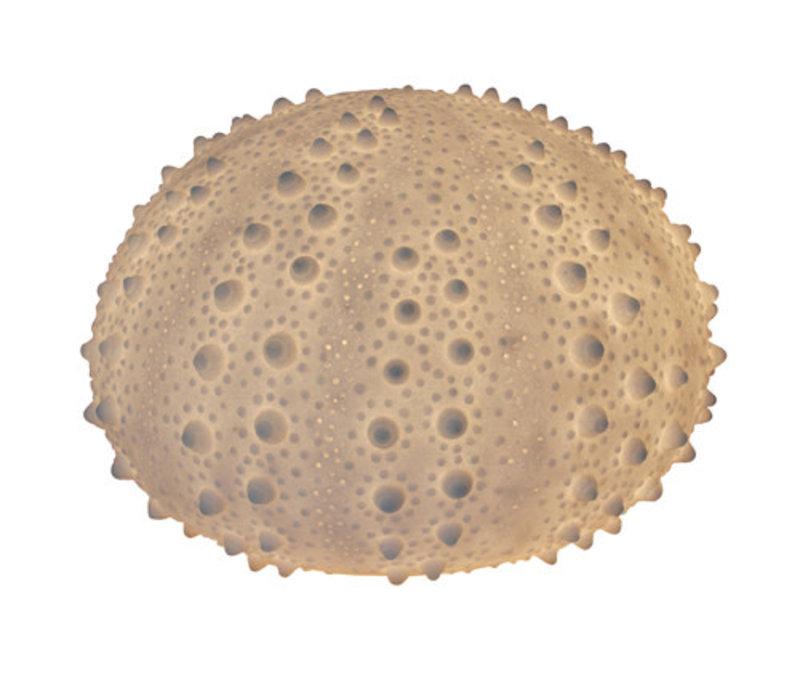Fine Asianliving Sandstone Sea Urchin Lamp 40.5x26.8cm