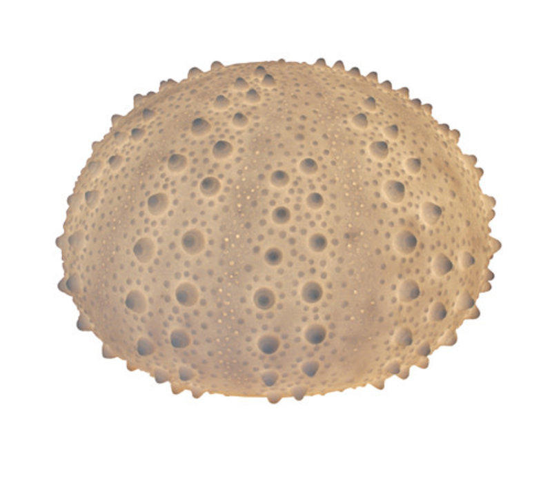 Sandstone Sea Urchin Lamp 40.5x26.8cm