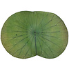 Fine Asianliving Placemat 100% Real Lotus