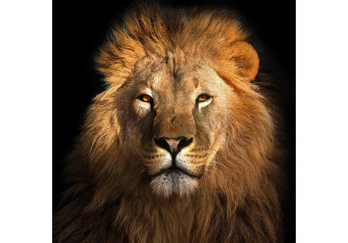 Fine Asianliving Tableau sur Toile sur Verre Acrylique Imprimé Le Roi Lion L95xH95cm
