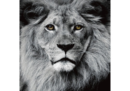Fine Asianliving The Lion King Black White Digitalprint 80x80cm Safety Glass