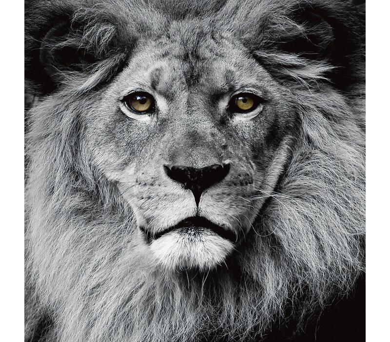 De Leeuwen Koning Zwart Wit Digitale Print 80x80cm Veiligheids Glas