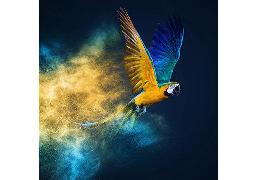 Fine Asianliving Vliegende Papagaai Digitale Print 95x95cm Acryl Glas