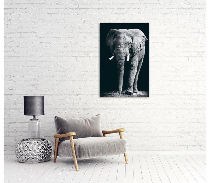Grote Olifant Zwart Wit Digitale Print 80x120cm Veiligheids Glas