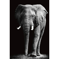 Big Elephant Black White Digitalprint 80x120cm Safety Glass