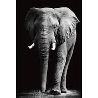 Tableau sur Verre de Sécurité Imprimé Éléphant Noir et Blanc L80xH120cm