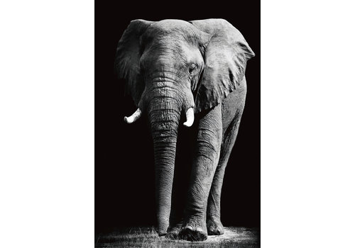 Fine Asianliving Grote Olifant Zwart Wit Digitale Print 80x120cm Veiligheids Glas