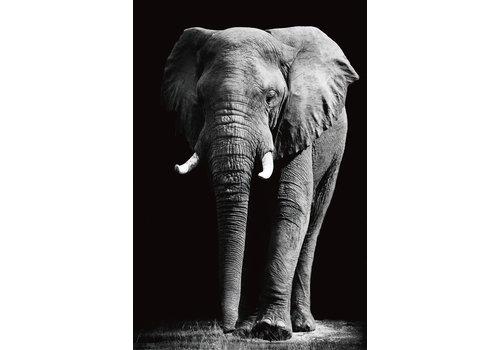 Fine Asianliving Tableau sur Toile sur Verre de Sécurité Imprimé Éléphant Noir et Blanc L80xH120cm