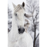 White Horse in the Wind Digitalprint 80x120cm Safety Glass