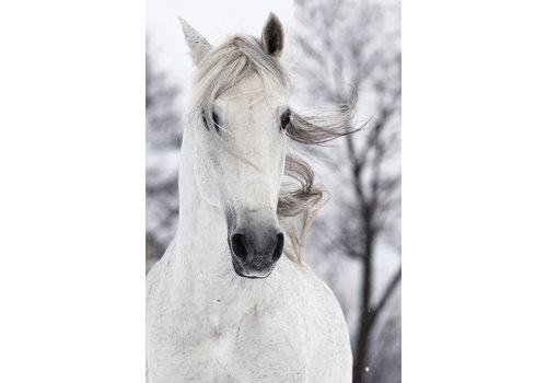 Fine Asianliving White Horse in the Wind Digitalprint 80x120cm Safety Glass