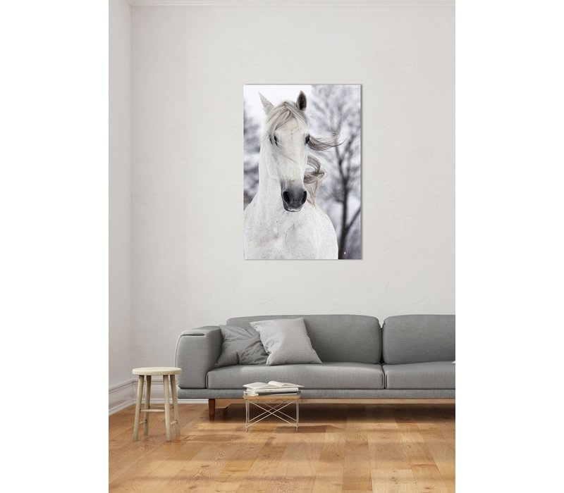 Wit Paard In De Wind Digitale Print 80x120cm Veiligheids Glas