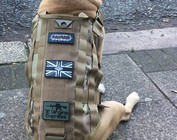 Tactical Dog Vests
