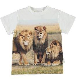 Molo Molo Road LIONS