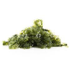 Zeebes Groen 250gr