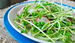 Salad pea shoots pr pot 100gr