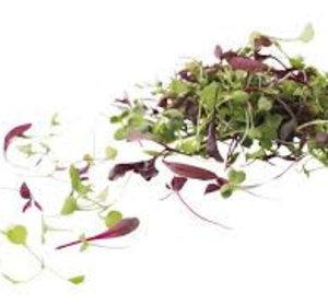 Micro leaf salad mix 30gr pr schaaltje