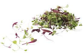Claessens Micro leaf salad mix 30gr pr schaaltje