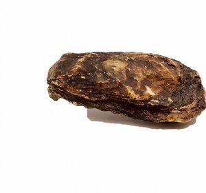 Holle Zeeuwse oester uit het Grevelingenmeer