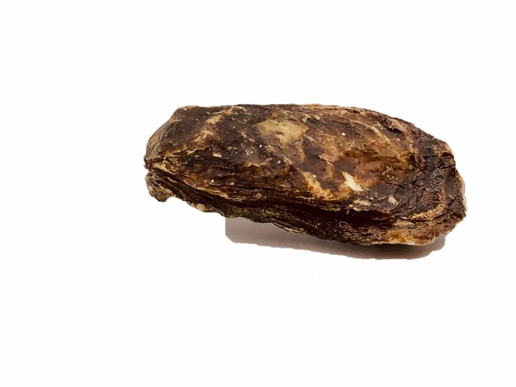 De Jager Holle Zeeuwse oester uit het Grevelingenmeer