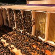 Verse honingraat