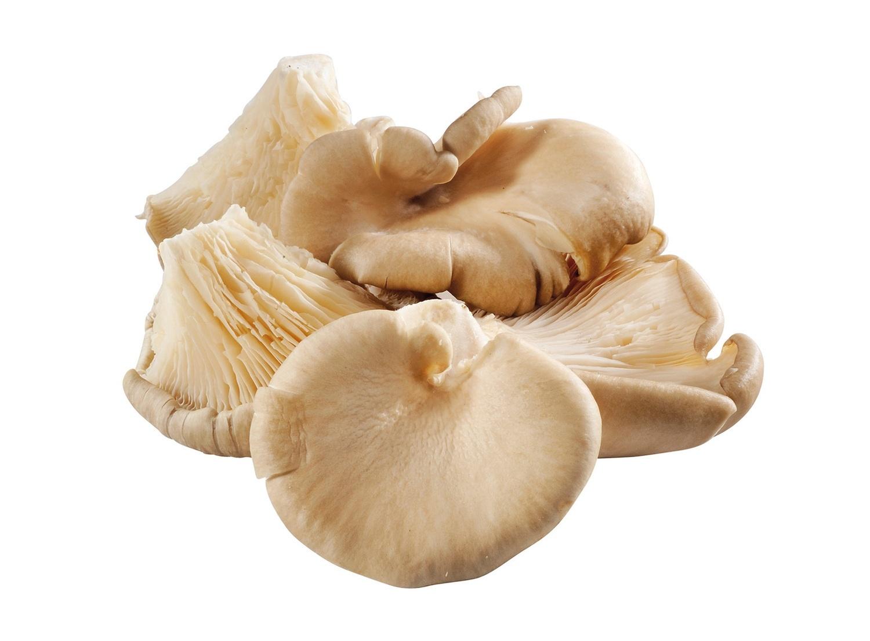 Champignons oesterzwam pr schaal (500gr)