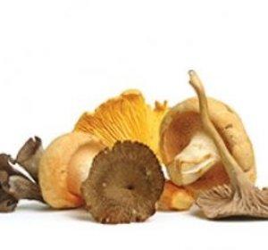 Champignons bosmengeling gesneden per schaal 300 g r