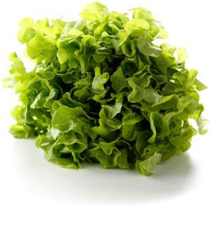 Sla Eikenblad groen /Stuk
