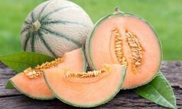Meloen Cavaillon