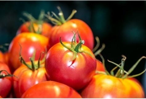 Tomaten Mary V Pink 1kg
