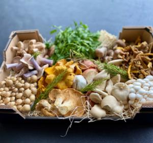 Funghi Fiesta Box