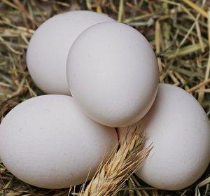 BIO Eieren (6stuks)