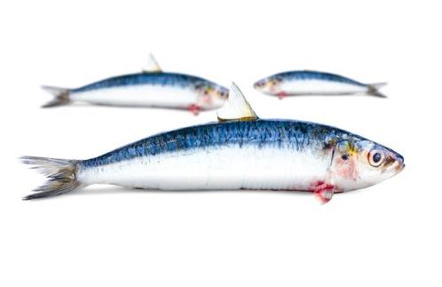 Verbiest Sardines filet zonder vel +/- 120gr