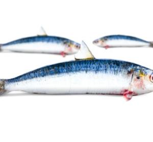 Sardines filet met vel +/- 140gr
