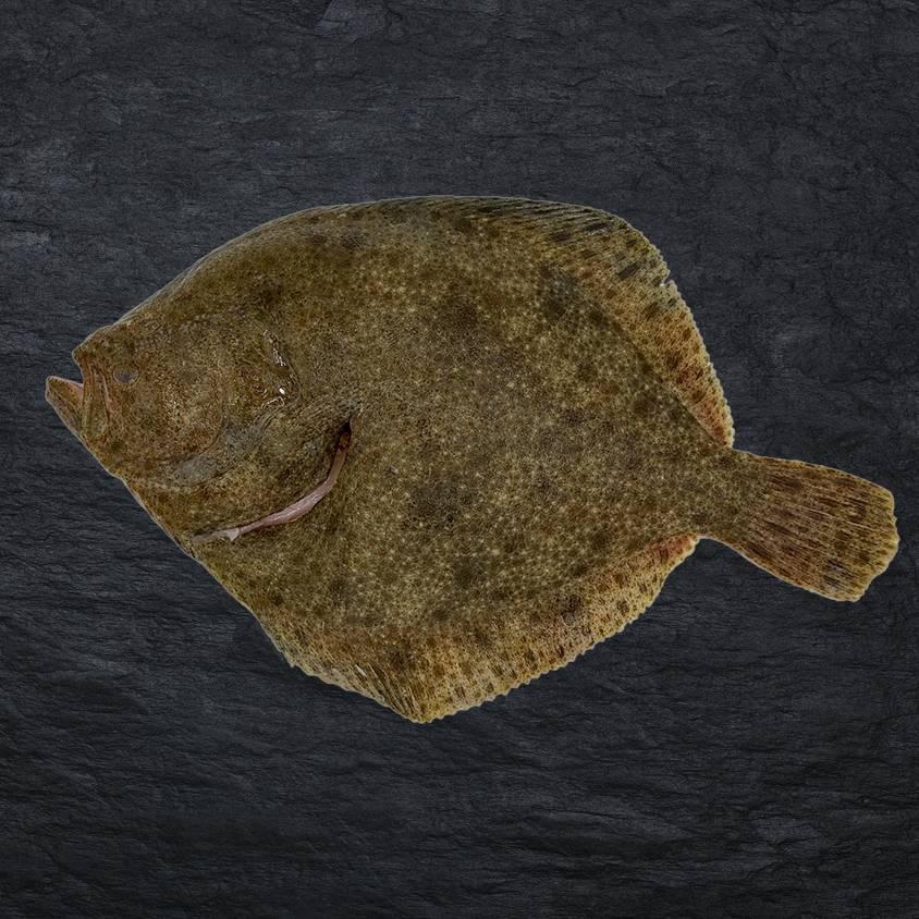 Verbiest Tarbot filet zonder vel 360gr