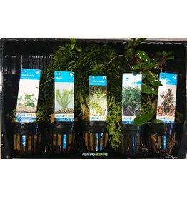 Starter Aquariumplanten Mix