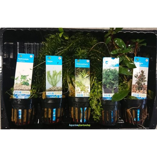 Starter Aquariumplanten Mix