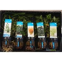 Azië Aquariumplanten Mix