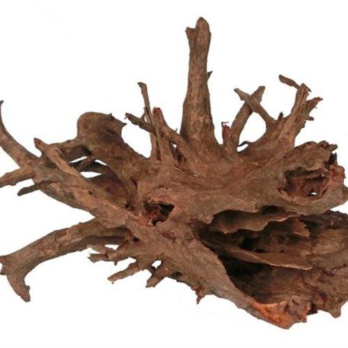 Corbo roots