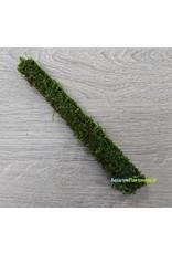 Bamboo stok met javamos 20 cm